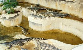 Crocodile farm in Czech Republic Royalty Free Stock Photo