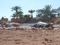 Crocodiles of the nile. Crocodile farm in Morocco agadir to relocate the breed royalty free stock photo