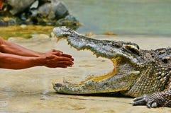 Crocodile show Stock Photos