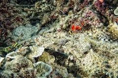 Crocodile fish on sand in Indonesia Stock Photo