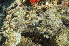 Crocodile fish on sand in Indonesia Stock Photos
