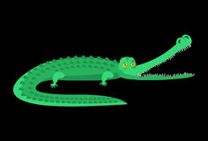 Crocodile . Good caiman. Wild animal. Green reptile with Stock Image