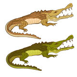 Crocodile green and brown. Vector cartoon image isolated Royalty Free Stock Photography