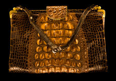 Crocodile handbag Stock Image