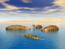 Crocodile and Hippos Stock Images