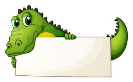 A crocodile holding an empty signage Stock Photography