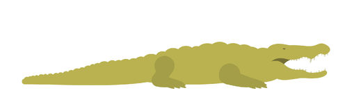 Crocodile. Illustration on white background. Vector Stock Images