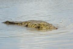 Crocodile In The Mara River