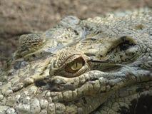 Crocodile indiquant le défi si vous venez ici photos libres de droits