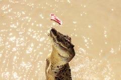 Crocodile jumping Stock Photo