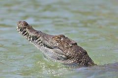 Crocodile at Lake Baringo, Kenya. Freshwater crocodile at Lake Baringo, Kenya showing its head Stock Photo
