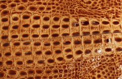 Crocodile leather Royalty Free Stock Photo