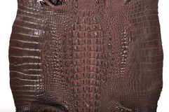 Crocodile leather Stock Images