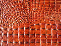 Free Crocodile Leather Royalty Free Stock Photography - 2359537