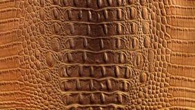 Crocodile leather stock photos