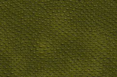 Crocodile leather. Texture of alligator skin, a close-up, khaki color Royalty Free Stock Photo