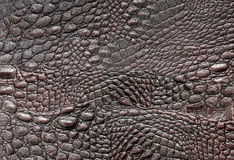 Crocodile leather Stock Images