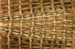 Crocodile leather background Stock Photos