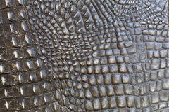 Crocodile leather. background Stock Photography