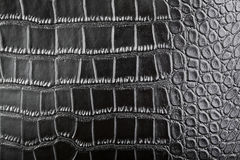 Crocodile leather Royalty Free Stock Images