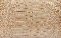 Crocodile Leather Royalty Free Stock Photography