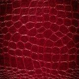 Crocodile leather Stock Image
