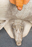 Crocodile leather. And crodile Head Royalty Free Stock Images