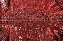 Crocodile leather Royalty Free Stock Image