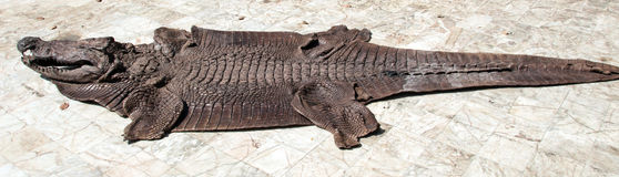 Crocodile leather outdoor Stock Photos