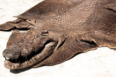 Crocodile leather outdoor Royalty Free Stock Images
