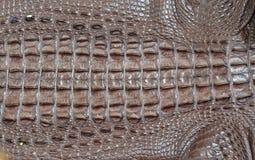 Crocodile leather. Stock Photos