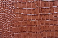 Crocodile leather texture. High resolution macro picture of leather texture Stock Photography