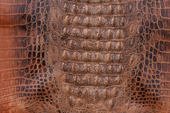 Crocodile leather texture Stock Photography