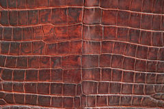 Crocodile leather texture Stock Image