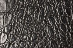 Crocodile leather texture Royalty Free Stock Photo