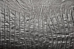 Crocodile leather texture. To serve as background Stock Photography