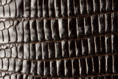 Crocodile leather texture Stock Photos