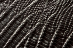 Crocodile leather texture Royalty Free Stock Images