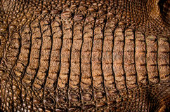 Crocodile leather texture background Stock Images