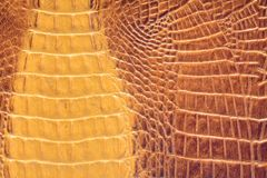 Crocodile leather texture closeup Royalty Free Stock Images