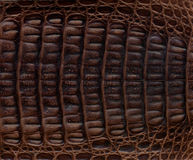 Crocodile Leather Textured Background Stock Photo