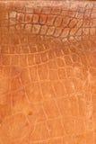 Crocodile leather Royalty Free Stock Photo