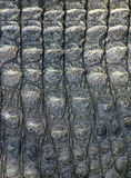Crocodile leather1 Stock Images