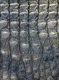 Crocodile Leather1 Stock Images