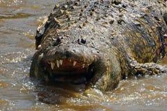 Crocodile mort en Mara River, Maasai Mara Game Reserve, Kenya Photos libres de droits