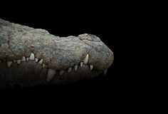 Crocodile mouth. Close up of crocodile mouth in dark background Royalty Free Stock Images
