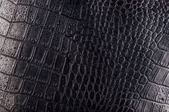 Crocodile Or Snake Skin Leather Background. Black Texture Covered With Water Drops