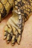 Crocodile paw Stock Photo