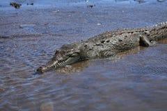 Crocodile River Ausflug auf dem Tarcoles-Fluss Lizenzfreie Stockfotografie