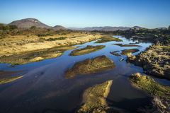 Crocodile river in Kruger National park, South Africa Stock Photography